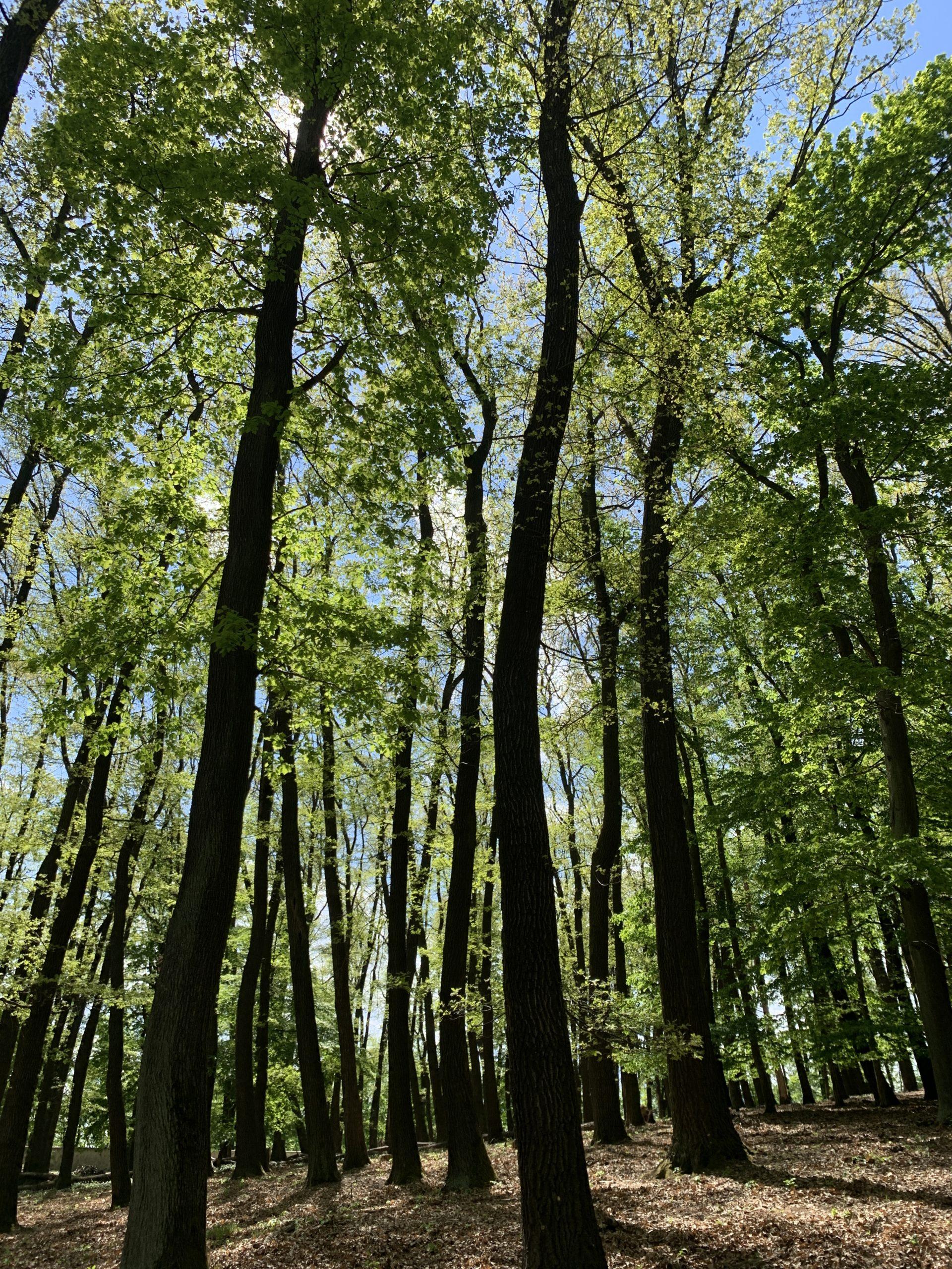 Laufstrecke Wiener Wald