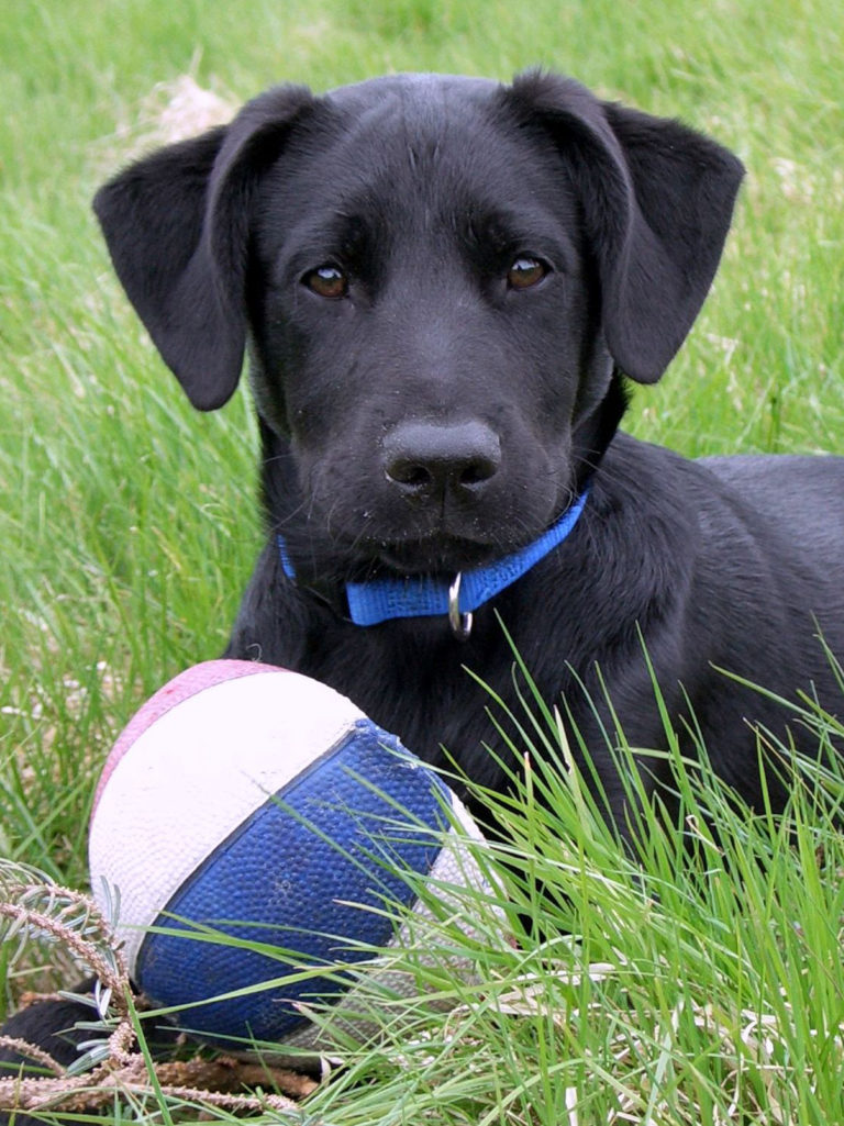 Unser Hund Ben